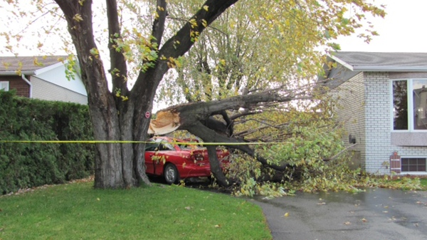 Herb Thomson sent in this photo of a tree that fell on a car in Salaberry de Valleyfield, about 40 km from Montreal (Oct. 30, 2012)