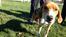 OSPCA investigates injured dog Aurora