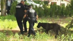 The mastiff was taken away after attacking the four-year-old girl Monday.