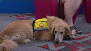 CTV Montreal: Author Carole Villeneuve: Canine Angels