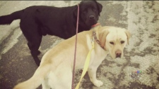 CTV Montreal: Lost Labs Found