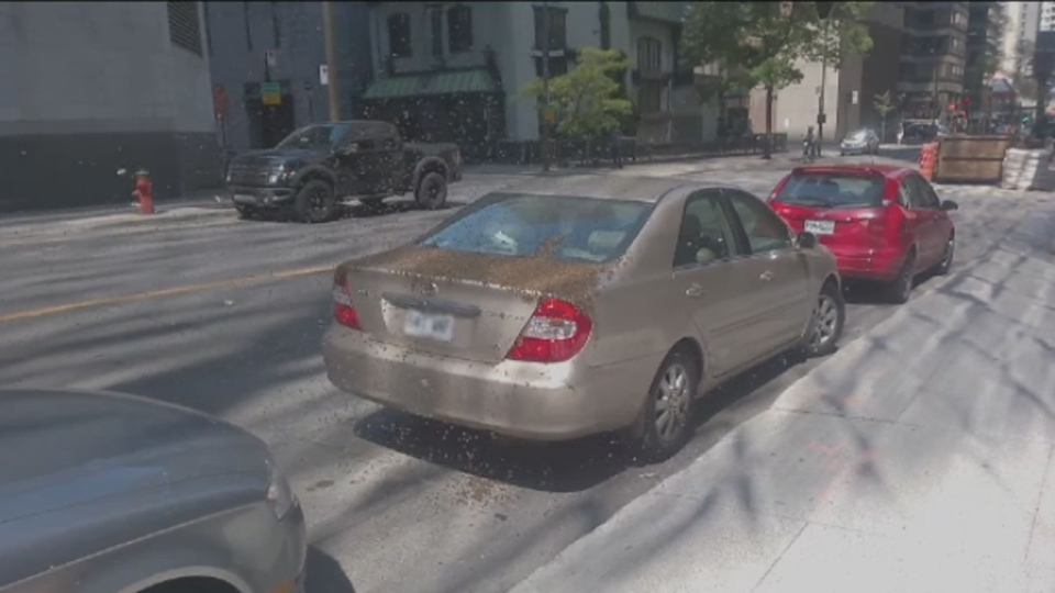 Cote St. Luc councillor and EMSB spokesman Mike Cohen found his car had been colonized by bees in downtown Montreal Monday. (Screenshot/Youtube)