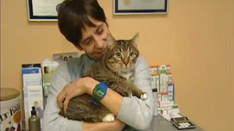 Shelley Schecter is the head of Educhat, saving stray cats in Montreal.