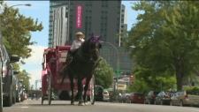 CTV Montreal:  Horse palace needs cash