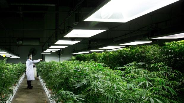 government of canada how to open a marijuana dispensary