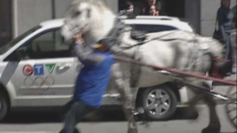 The driver was dragged as he tried to stop the horse from tearing off.