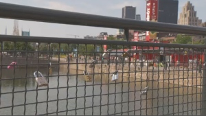Old Port officials are removing love-locks left on bridges to protect against potential damage.