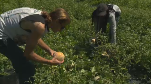 Farm for troubled teens