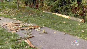 5-year-old girl in coma after hit by tree at B.C.
