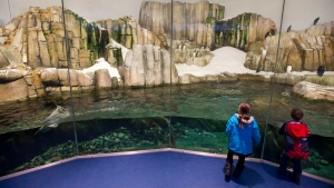 Children visit the Penguins at the Biodome in Montreal, Wednesday, February 20, 2013. THE CANADIAN PRESS/Graham Hughes