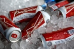 In this Thursday, March 5, 2015 file photo, Budweiser beer cans at a concession stand at McKechnie Field in Bradenton, Fla. (AP/Gene J. Puskar, File)