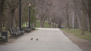 Is this how Lafontaine Park will look 20 years from now? The city wants citizen's opinions on how it should transform.