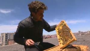Alveole urban beekeeping