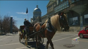 CTV Montreal: What will become of horses
