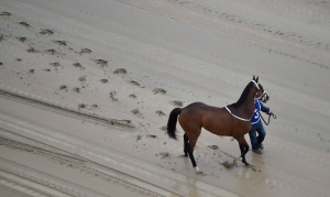 A hot walker moves down a muddy track with Homeboykris before the first horse race ahead of the 141st Preakness Stakes at Pimlico Race Course, Saturday, May 21, 2016, in Baltimore. (AP Photo/Mike Stewart)