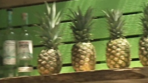 CTV Montreal: Produce at Old Port market