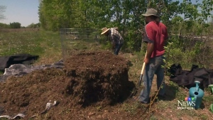 CTV Montreal: Green thumbs out