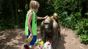 A child touches the head of a gorilla statue where flowers have been placed outside the Gorilla World exhibit at the Cincinnati Zoo & Botanical Garden, Sunday, May 29, 2016, in Cincinnati. (AP Photo / John Minchillo)
