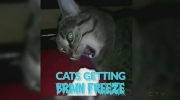 cats getting brain freeze
