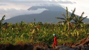 In this March 29, 2010 file photo, a resident walks past banana trees near the base of Mount Nyiragongo, one of Africa's most active volcanos, in Goma, Congo. (AP Photo / Rebecca Blackwell,File)