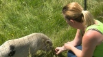 CTV Barrie: Ecotherapy Farm