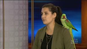 CTV Montreal: Paco the parakeet