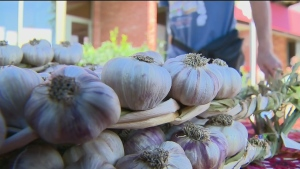 CTV Montreal: Promoting Quebec garlic
