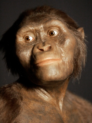 This Aug. 14, 2007, file photo shows a three-dimensional model of the early human ancestor, Australopithecus afarensis, known as Lucy, on display at the Houston Museum of Natural Science. (AP Photo/Pat Sullivan, File)