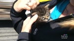 Three kittens were rescued along a Nova Scotia highway on Thursday.