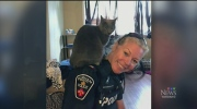 cat, durham officer