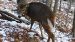 May the deer is back home with her family (photo: Facebook)