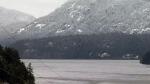 Cougar stalks Campbell River men after boat sinks