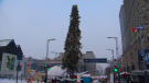 Montreal Christmas tree gets mixed reviews