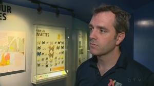 Maxim Larivée, entomologist, monarch