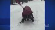 CTV Montreal: The dog that won't walk
