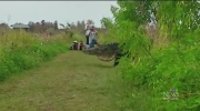CTV Montreal: Giant gator